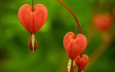 Het Hart Spreekt